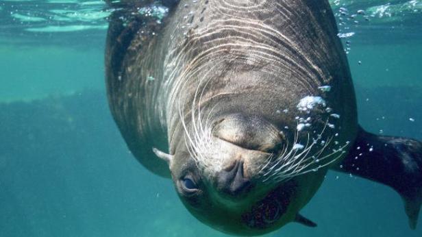 'Um foca na sexta' de casa nova