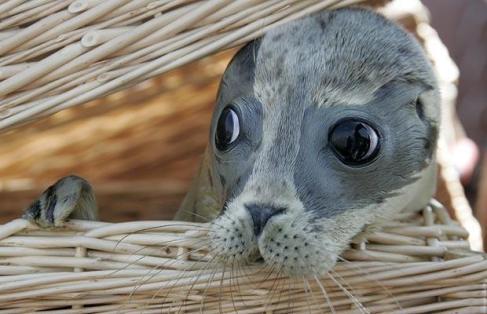 Um foca na sexta