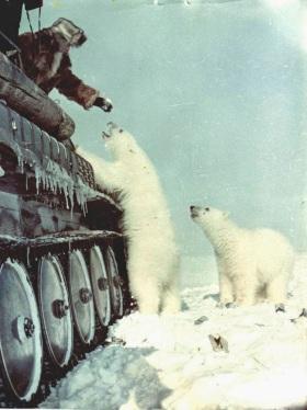 Soldados russos alimentam ursos polares de seu tanque de guerra (1950)